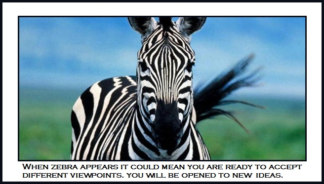 Spirit Animal - Zebra