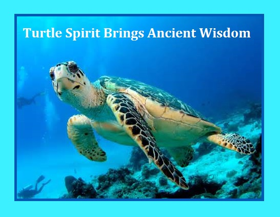Turtle Animal Spirit Guide