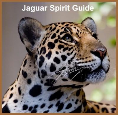 wise jaguar in