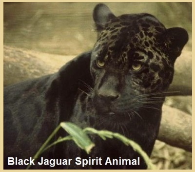 Animal Spirit Guide - Jaguar