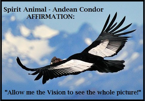 Animal Spirit Guide - Andian Condor