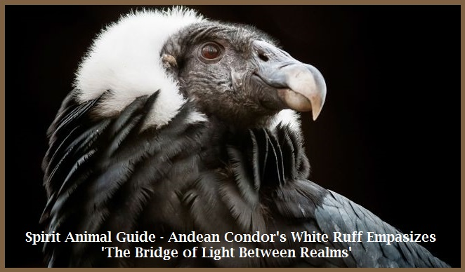 Animal Spirit Guide - Andean Condor