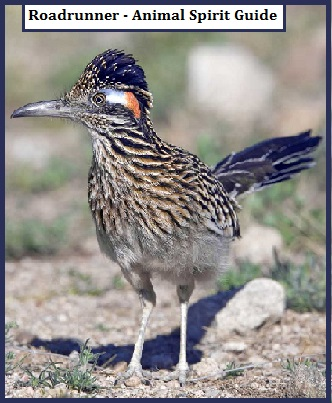 Roadrunner - Animal Spirit Guide
