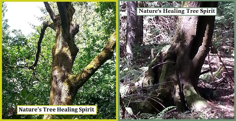 Nature's Healing Tree Spirits