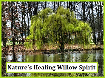 Nature's Tree Healing Spirits