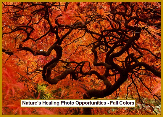 Nature's Healing Photo Opportunities