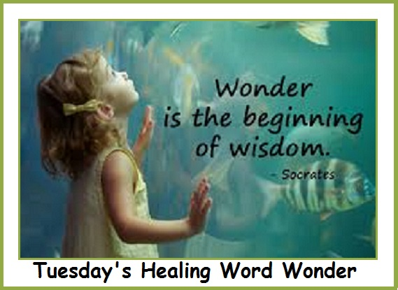Tuesday's Healing Word Wonder