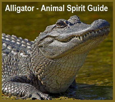 Alligator - Animal Spirit Guide