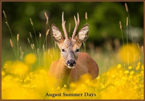August Summer Days