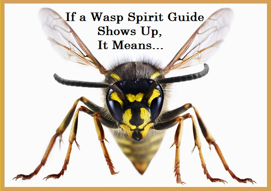 Wasp Spirit Guide