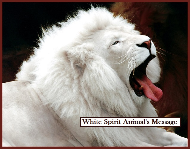 White Spirit Animal's Message