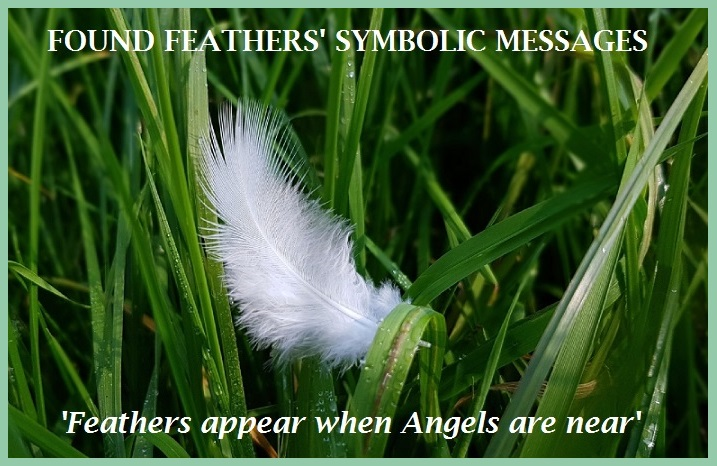 Found Feathers' Symbolic Messages